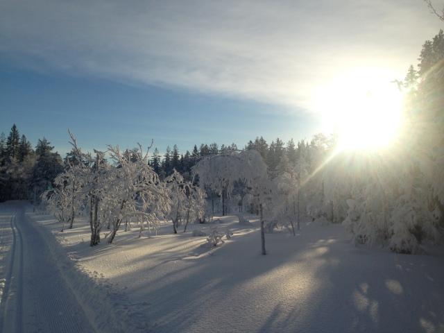 Hva motiverer deg til forskningsformidling? Tenk deg en visjon som gir deg retning og mening, Som kan fungere som dette fotoglimtet fra Nordmarka i slutten av januar 2015.
